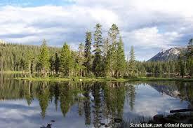 pine tree reflection picture mirror lake utah