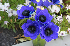 19 indoor growing flower antirrhinum majus f1 admiral