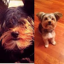 royal pet beauty shop 24 photos u0026 51 reviews pet groomers