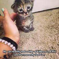 25 sad kitty ideas drop kitty fat
