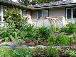 backyards chic backyard farm service 25 farms maine gmo amazing