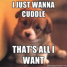 Puppy Face Meme - can i cuddle with you puppy meme google search humor