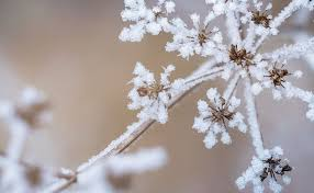 Winter Indoor Garden - winter weather can affect your indoor garden