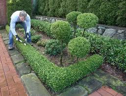 cura giardino manutenzione giardini e cura verde fratelli bonoldi giardini