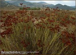 native indian plants native american indian indigenous plants of souther california