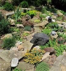 Rock Gardening Introduction To Rock Gardening
