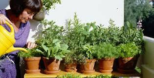 gem se pflanzen balkon kräuter und gemüse vom balkon hörzu