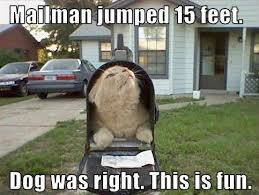 Sneaky Cat Meme - sneaky kitty meme kitty best of the funny meme