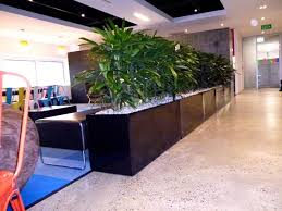 indoor plants hire for offices u0026 businesses u2013 perfection plant hire