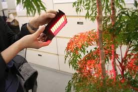 light and plant growth plant growth gets the red light from showa denko leds