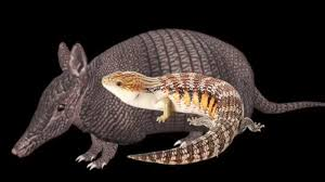Armadillo Meme - is that an armadillo know your meme