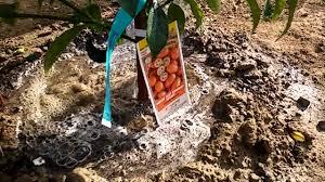 starting our desert backyard fruit orchard and garden april 2016