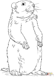 groundhog standing coloring free printable coloring pages