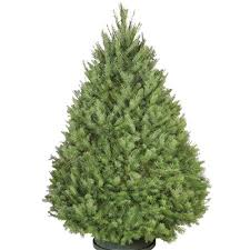 live christmas trees types of real christmas trees the home depot