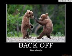 Funny Bear Meme - the most amazing funny bear pictures 24 pics