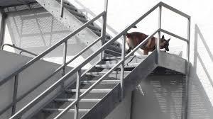 gitter treppe gittertreppe plastik