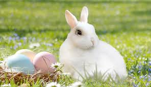 easter bunny children taken from christian parents because they didn t believe