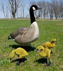 goose lawn ornaments statues