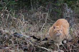 natural flea killer archives wildernesscat
