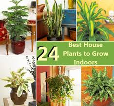 best indoor house plants 24 best house plants to grow indoors diycozyworld home