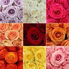 flowers in bulk bulk roses 150 stems your colors