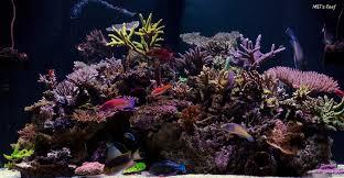 Floating Aquascape Reef2reef Saltwater And Reef Aquarium Forum - the journey continues mike u0026 terry u0027s 280g reef savvy reef2reef