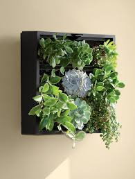Wall Mounted Planter Trendy Indoor Wall Planter 119 Indoor Wall Mounted Planter Box
