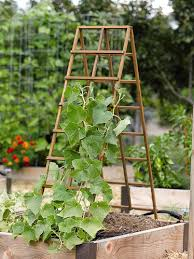 Make Your Own Cucumber Trellis I Like This Style Of Trellis Because It Can B Folded And Put Away