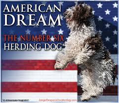 american eskimo dog ireland greater shelby kennel club u2013 sunday july 16 2017 canine chronicle
