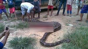 film ular phyton cerita film anaconda yang mengambil setting tempat di indonesia