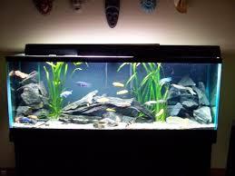 aquarium decorations 10 gallon fish tank stand ideas for your aquarium aquarium