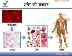 Human Anatomy Images Free Download Vestige Marketing Success Business Plan In Hindi Free Download Pdf U2026