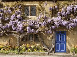 wisteria color palette wallpaper