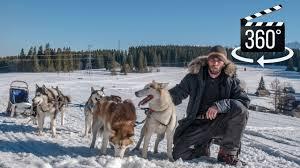 360 experience real husky dog sledding youtube