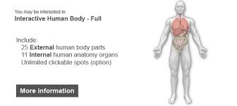 Human Anatomy Full Body Picture Interactive Human Body Organs Diagram By Art101 Codecanyon