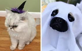 Halloween Costume Ideas For Pets 17 Of The Best Scary Halloween Costume Ideas For Pets