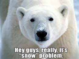 Polar Bear Meme - international polar bear day hysteria joe steigerwald the stag