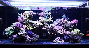 Reef Aquarium Lighting How To Start Reef Tank Pet Stuff Guide