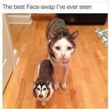 Funny Dog Face Meme - the best face swap i ve ever seen funny pet humor lol meme