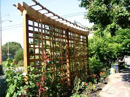 Wooden Trellis Plans Portfolio U2013 Wood Projects Calyx Landscape Design