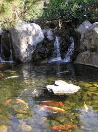 ornamental pond stock photo image of pond garden 629672
