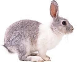 24 stocks at rabbit image group