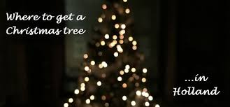 where to buy christmas lights where to buy a christmas tree in holland