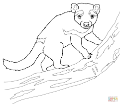 tasmanian devil on a tree coloring page free printable coloring