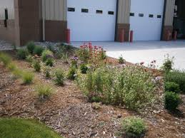 nebraska native plants rain gardens u2013 nebraska h20