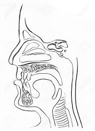 upper respiratory tract images u0026 stock pictures royalty free