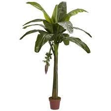 mini banana tree cheap mini banana tree find mini banana tree deals on line at