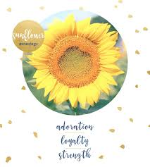 Flowers Colors Meanings - sunflower meaning and symbolism ftd com