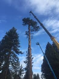 Wildfire Drake Clean by Arborists Archives Arbor 1 Tree Service