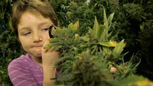 medical cannabis and kids a doctor u0027s guide for parents